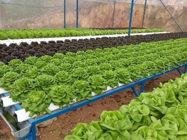 Ciudad Ho Chi Minh registra fructifero desarrollo de agricultura de alta tecnologia hinh anh 1