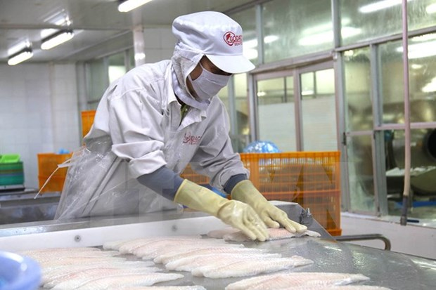 Exportadores de pescado Tra vietnamita tienden a ampliar el mercado de ASEAN hinh anh 1