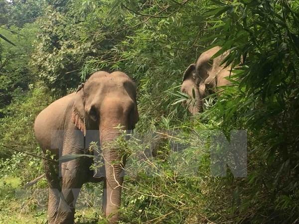 Destacan en Vietnam importancia de conservacion de la biodiversidad hinh anh 1