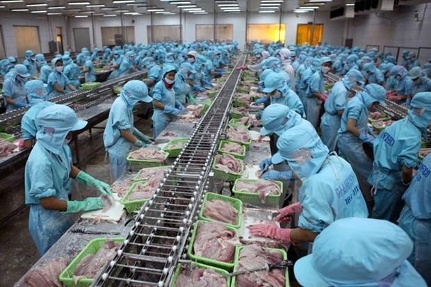 Aumentan exportaciones de pescado Tra vietnamita a China hinh anh 1