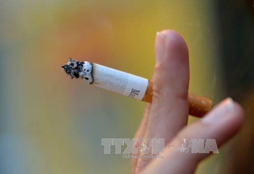 Alertan en Vietnam sobre consecuencias negativas del tabaquismo hinh anh 1
