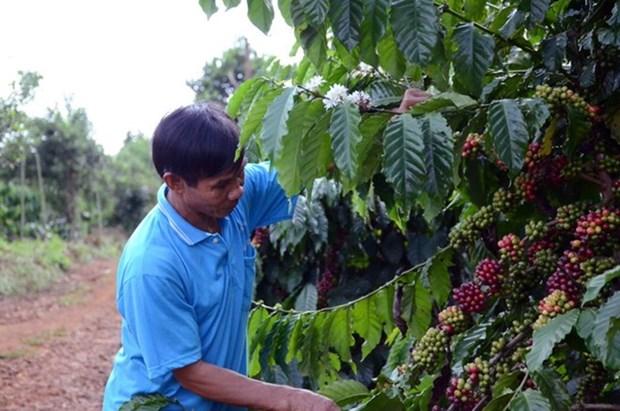 Intercambian en Hanoi medidas para impulsar comercio de productos agricolas de Vietnam hinh anh 1