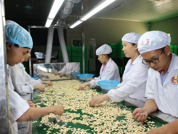Sobrepasa los mil millones dolares la exportacion vietnamita de anacardo hinh anh 1