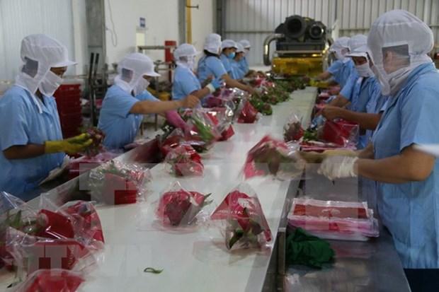 Vietnam se dirige hacia 10 mil millones de dolares por exportaciones de hortalizas en 2020 hinh anh 1