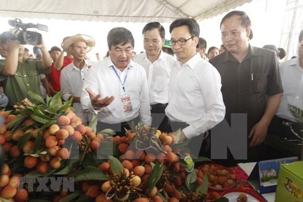 Inauguran primer festival de lichi en provincia norvietnamita de Hai Duong hinh anh 1