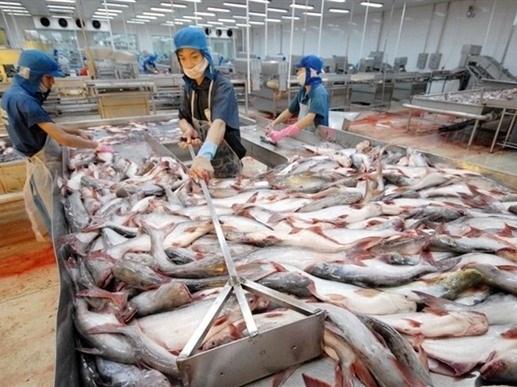 Piel de pescado, producto prometedor para exportacion en Vietnam hinh anh 1
