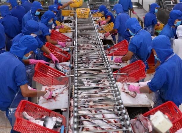 China entre los principales importadores de mariscos vietnamitas hinh anh 1