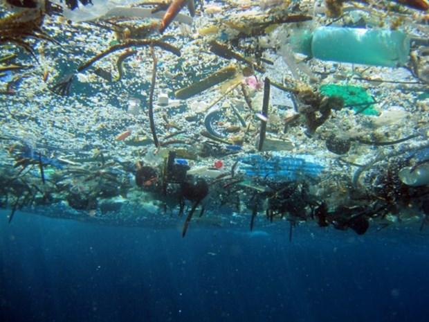 Vietnam responde al Dia Mundial del Medio Ambiente y a la Semana del Mar y las Islas hinh anh 1