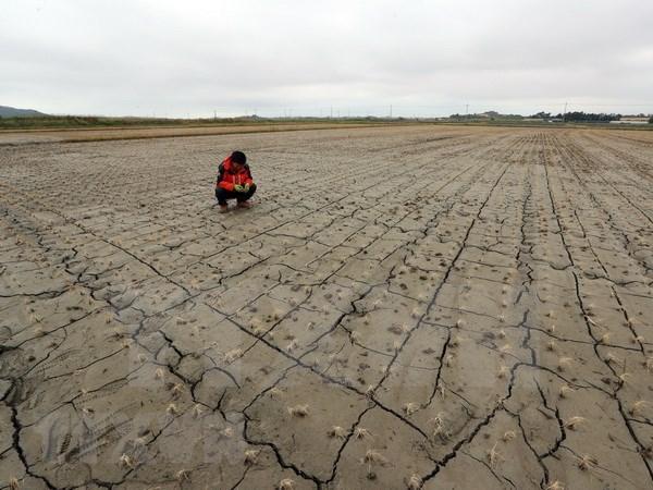 Vietnam responde al Dia Mundial de Lucha contra la Desertificacion y la Sequia hinh anh 1