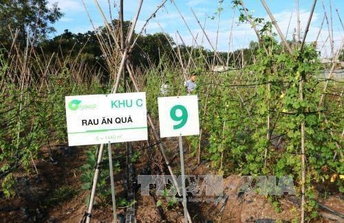 Corporacion Financiera Internacional asiste a Vietnam a mejorar inocuidad de los alimentos hinh anh 1