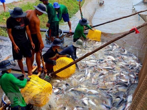 Medio Oriente, mercado potencial de productos acuaticos vietnamitas hinh anh 1