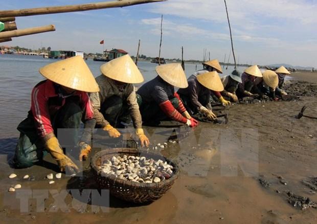 Da Nang acelera la preservacion de aldeas de pescadores antiguas para disparar el turismo hinh anh 1