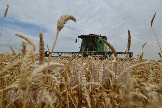 Paises sudesteasiaticos analizan ventajas de la agrosilvicultura en garantia de seguridad alimentaria hinh anh 1