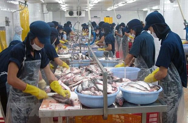 EE.UU. podria reconocer en corto tiempo el sistema regulador del pangasius de Vietnam hinh anh 1