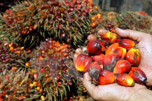 Union Europea suspende prohibicion de importacion de aceite de palma crudo de Indonesia hinh anh 1