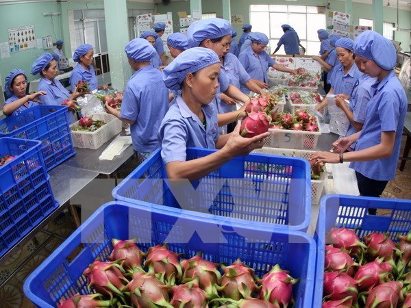 Aumentan exportaciones hortofruticolas de Vietnam en primer semestre del ano hinh anh 1