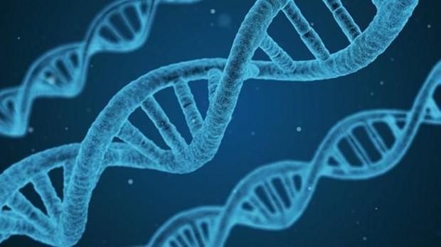 Debaten en Vietnam sobre aplicacion de decodificacion de genes en tratamiento de cancer hinh anh 1