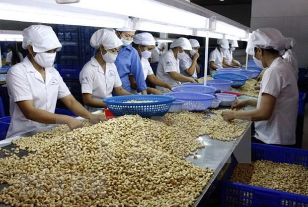 Ministerio de Agricultura llama a elevar calidad de anacardo vietnamita hinh anh 1