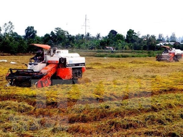 Vietnam exporta mas de tres millones de toneladas de arroz en primer semestre de 2018 hinh anh 1