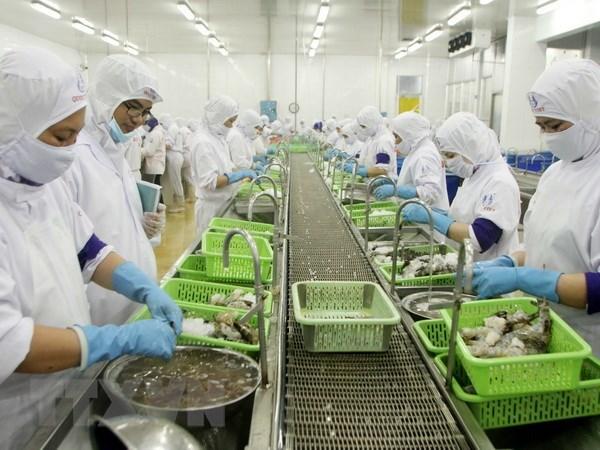 Ca Mau: alta meta de exportacion de camarones hinh anh 1