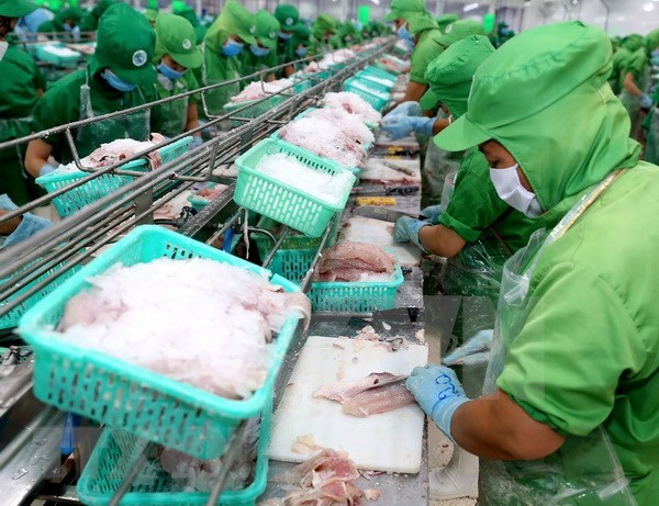 Nuevas oportunidades para exportacion de pescado Tra de Vietnam a China hinh anh 1