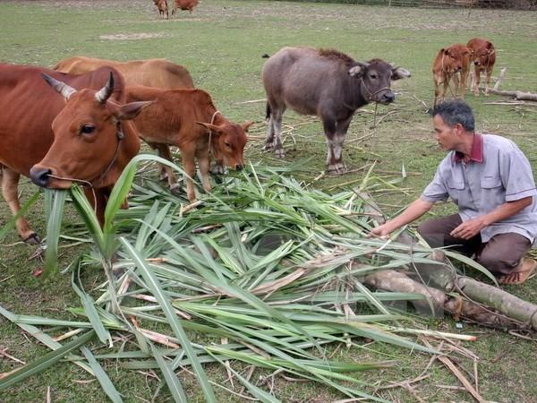 Vietnam asiste a provincias pobres en region del Centro del pais hinh anh 1