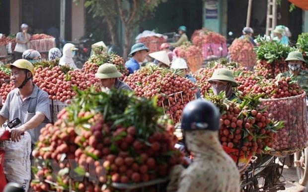 Bac Giang exporta su lichi a 30 paises hinh anh 1