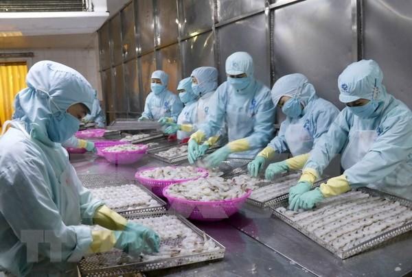 Australia condiciona importacion de camarones vietnamitas hinh anh 1