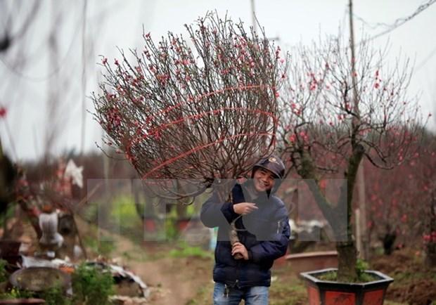 Trabajadores vietnamitas descansaran nueve dias en ocasion del Ano Nuevo Lunar 2019 hinh anh 1