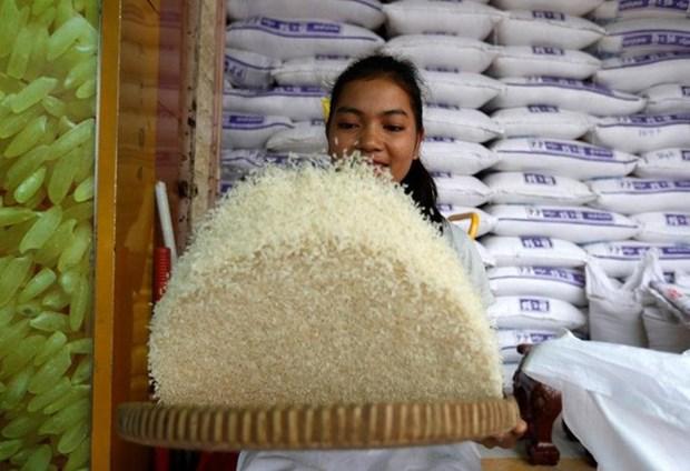 Exportaciones de arroz de Camboya se redujeron en primer semestre de 2018 hinh anh 1