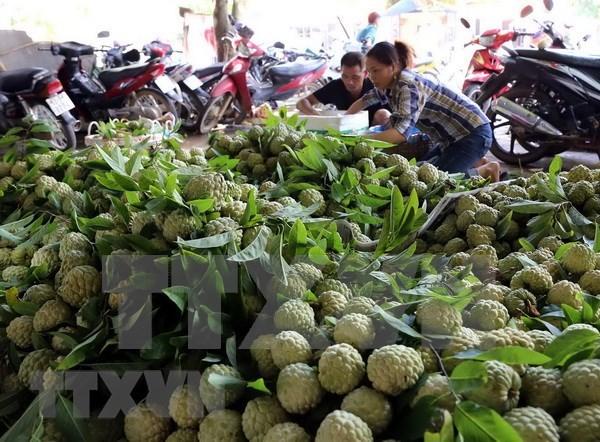 Vietnam y China robustecen comercio de productos agroacuicolas hinh anh 1
