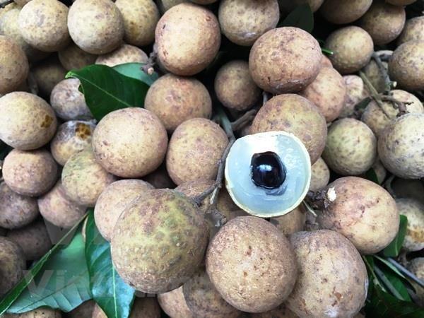 Vietnam promueve venta de longan a pocas semanas de comenzar recoleccion de la fruta hinh anh 1