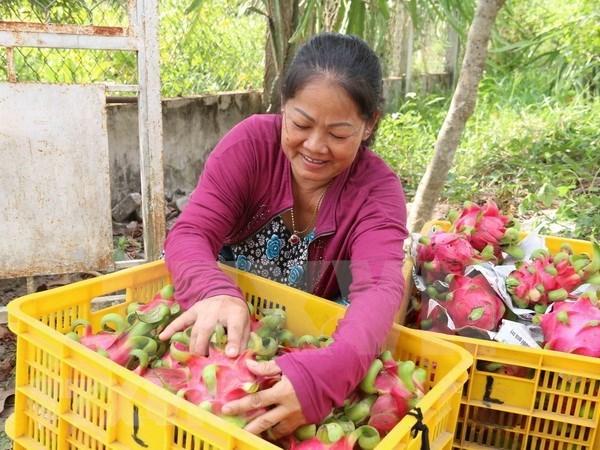Taiwan (China) apoyara a Vietnam en agricultura de alta tecnologia hinh anh 1