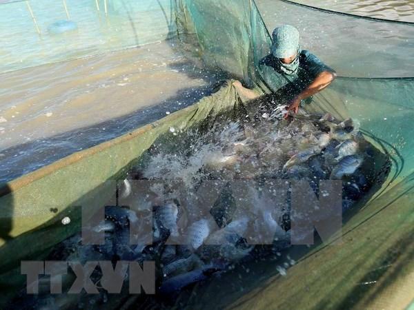 Medio Oriente, mercado potencial para los mariscos vietnamitas hinh anh 1