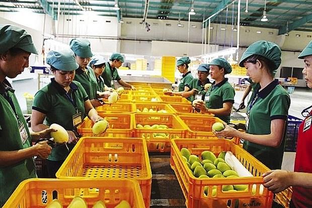 Nueva politica de Corea del Sur dificulta a productos agricolas vietnamitas hinh anh 1