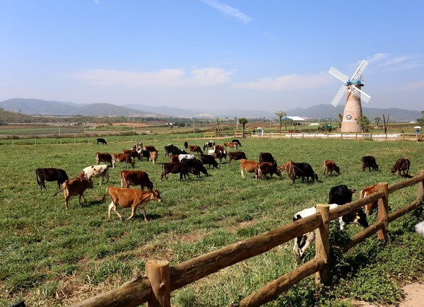 Agricultura organica en Vietnam logra crecimiento superior al promedio mundial hinh anh 1