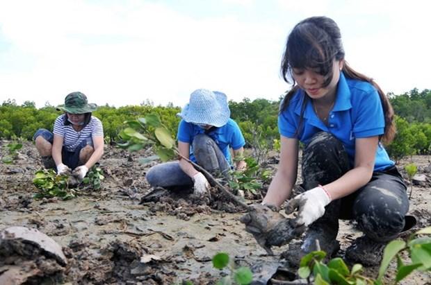 Vietnam promueve inversiones para cumplir meta de plantacion forestal costera hinh anh 1