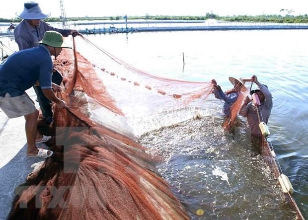Aumentan numero de localidades declaradas nuevas zonas rurales en Vietnam hinh anh 1