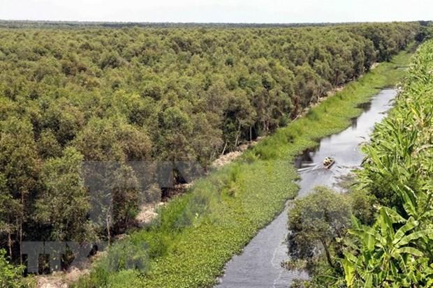 Acelera Vietnam labores de restauracion de bosques hinh anh 1