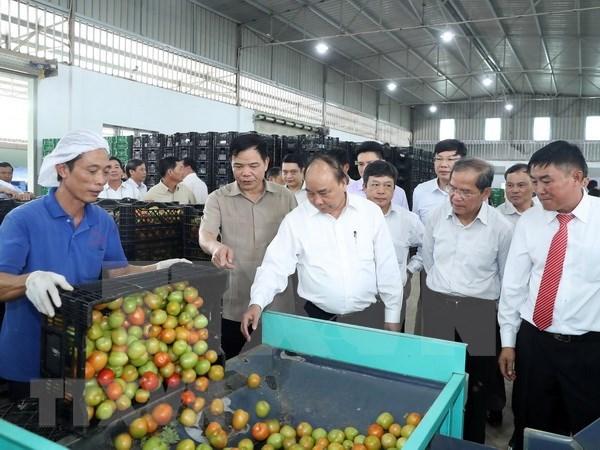 Premier de Vietnam visita modelo de cultivo de verduras limpias hinh anh 1