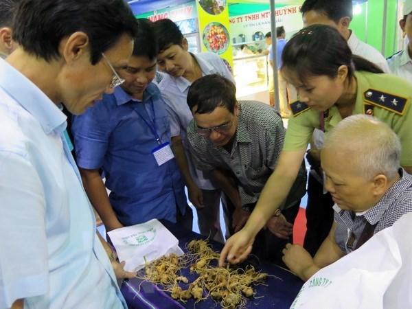 Festival promueve el gingseng Ngoc Linh de Vietnam hinh anh 1