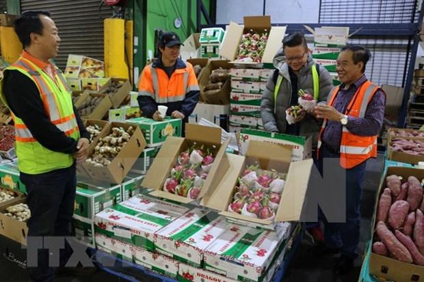 Aumentan ganancias por exportaciones de vegetales y frutas de Vietnam en lo que va de ano hinh anh 1