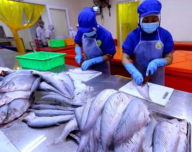 Exportaciones de productos acuicolas de Vietnam crecen 6,3 por ciento hinh anh 1