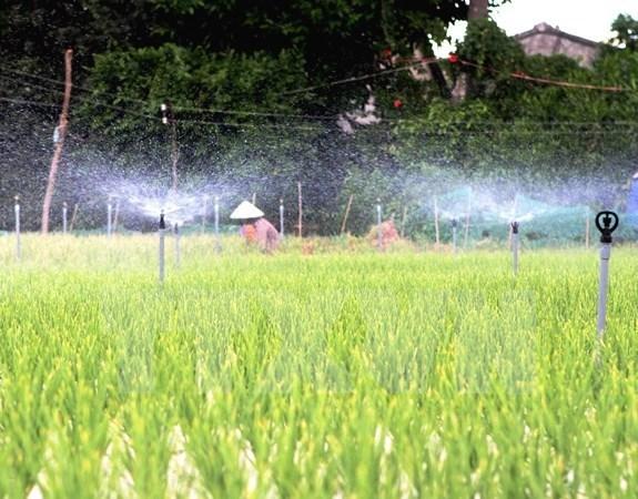 Provincia vietnamita de Ninh Thuan obtiene beneficio del cultivo de esparrago hinh anh 1