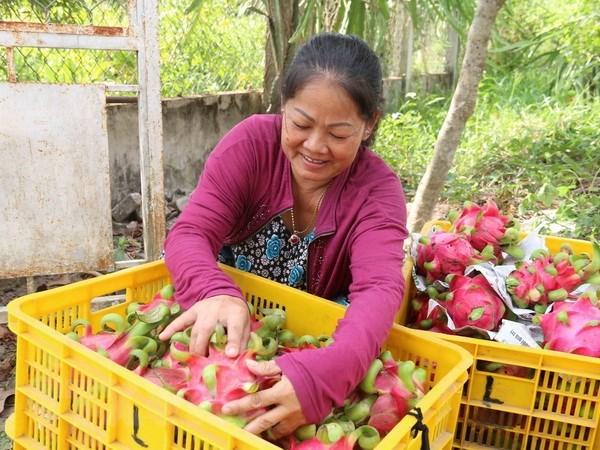 China sigue siendo mayor mercado receptor de verduras y frutas de Vietnam hinh anh 1