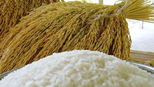 Tailandia se mantiene optimista con sus ventas de arroz al exterior hinh anh 1