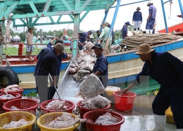 Vietnam trabaja por levantar tarjeta amarilla aplicada por UE a su sector acuicola hinh anh 1