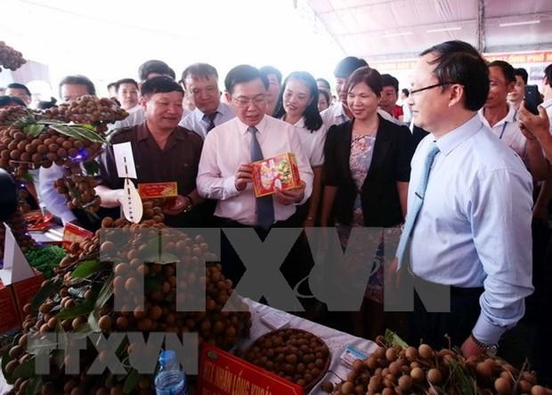 Provincia norvietnamita debe mejorar planificacion del cultivo de longan, sostiene Vicepremier hinh anh 1