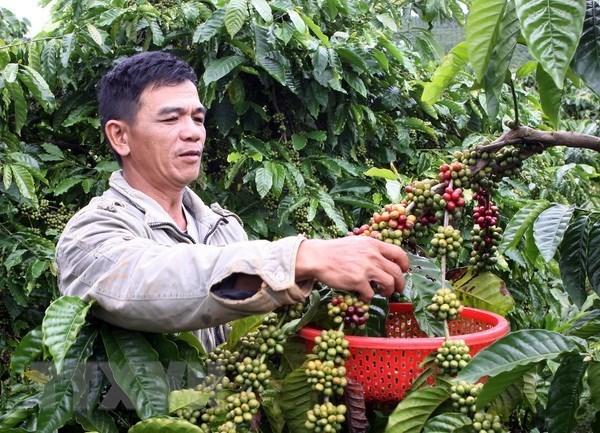 Vietnam publicara libro sobre indicaciones geograficas de productos culturales de la nacion hinh anh 1