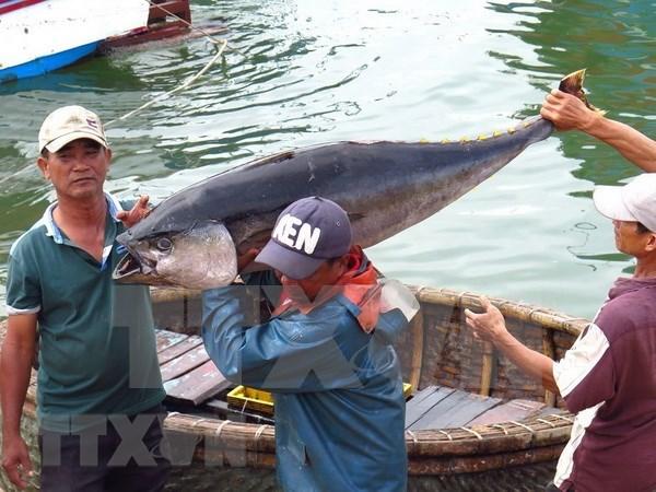 Exportaciones de atun de Vietnam se dirigen hacia la meta de 500 millones de dolares este ano hinh anh 1